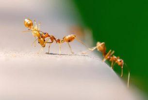 Mrówki w ogrodzie i w domu – skuteczne metody ich zwalczania