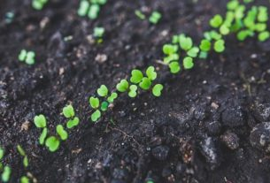 O czym pamiętać, jeśli chcemy wyhodować dobrej jakości warzywa?